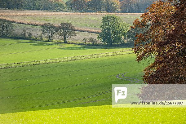Autumn afternoon in South Downs National Park near Worthing  West Sussex  England.