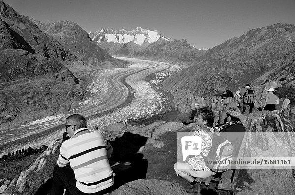 Von der Moosfluh (auf 2333 MüM) oberhalb der Riederalp haben Wanderer und Biker einen herrlichen Blick auf den längsten Gletscher der Schweizer Alpen. From Moosfluh above Riederalp trekkers and bikers have a wonderfull view to the longest melting glacier in the Swiss Alps.