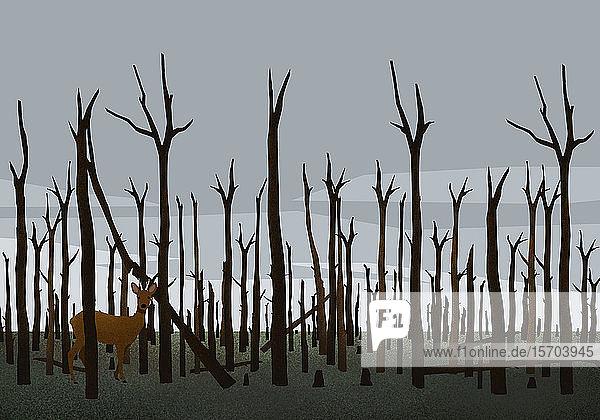 Hirsch zwischen verbrannten Bäumen im Wald nach einem Waldbrand