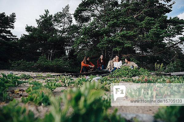 Männliche und weibliche Freunde ruhen sich aus  während sie auf einem Baumstamm an Bäumen im Wald sitzen