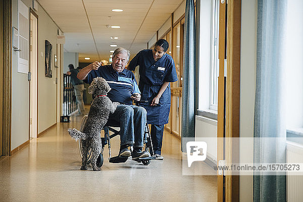 Eine Krankenschwester in voller Länge steht neben einem behinderten älteren Mann im Rollstuhl  der mit einem Hund auf einer Gasse im Altenheim spielt