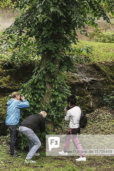 Weibliche Ausbilderin und ältere Männer fotografieren Baum während des Fotokurses
