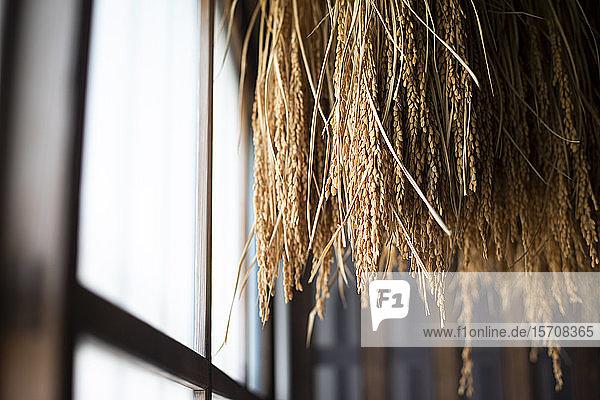 Japan  Takayama  Sake-Reis im Haus hängend