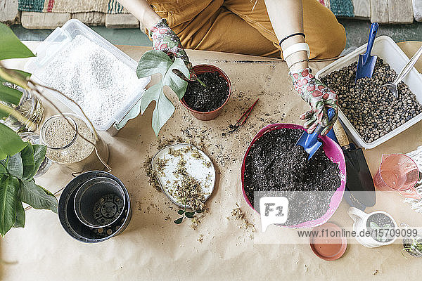 Top view of woman working with soil on table