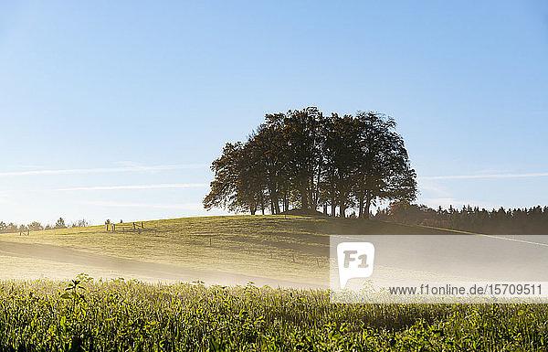 Deutschland  Oberbayern  Tölzer Land  Bäume im Feld im Morgennebel