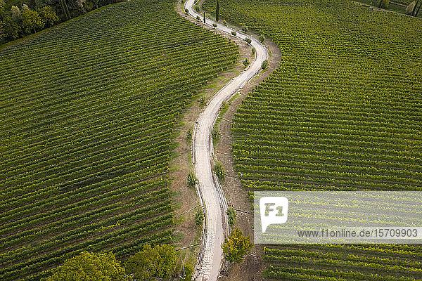 Italien  Friaul-Julisch-Venetien  Brazzano  Luftaufnahme einer kurvenreichen Landstraße über ausgedehnte grüne Weinberge