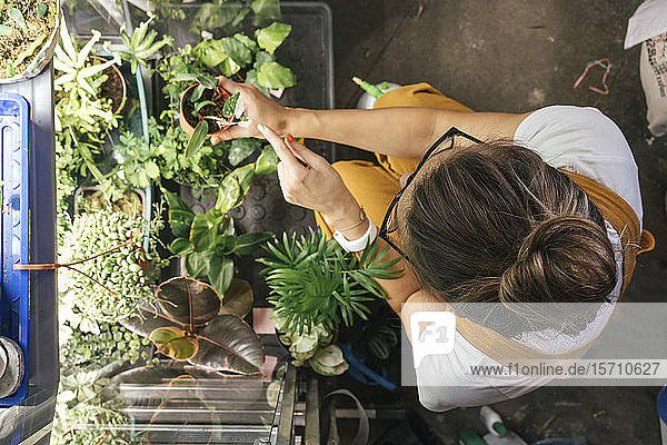 Top view of young woman caring for plants in a gardening shop