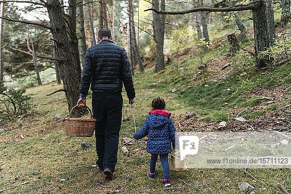 Vater und Tochter wandern mit Stock und Korb durch den Wald auf der Suche nach Pilzen