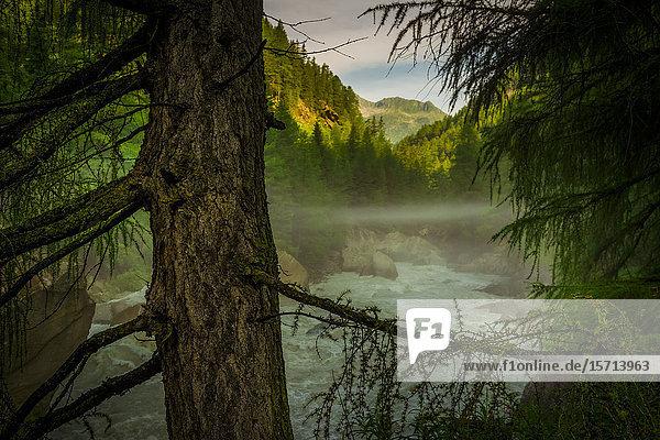 Gurgler Ache  Oetztal  Oetztal Alps  Austria  Europe