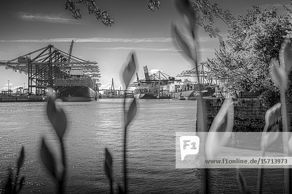 Waltershofer Hafen  Hamburg  Germany  Europe