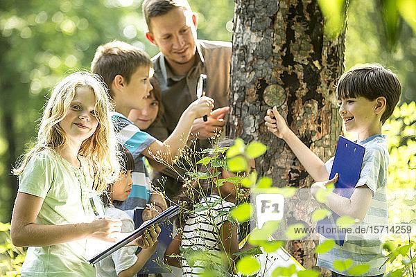 Schulkinder untersuchen mit ihrem Lehrer Baumrinde im Wald