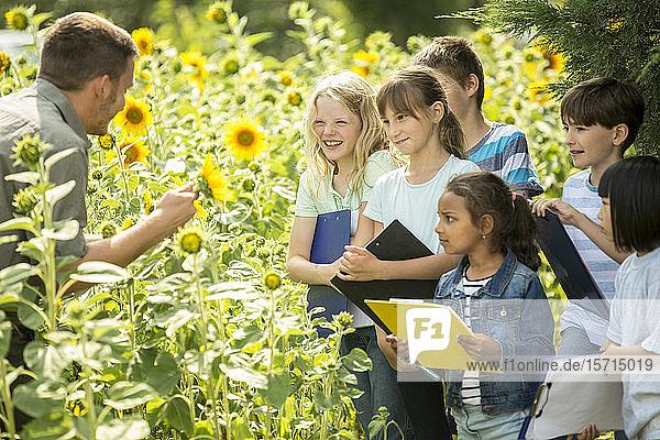 Schulkinder lernen die Natur in einem Sonnenblumenfeld kennen