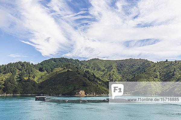 New Zealand  Marlborough Region  Picton Salmon farm on coast ofArapaoa Island