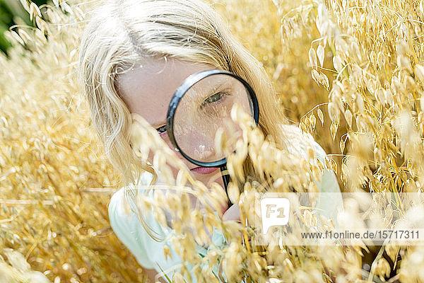 Kleines Mädchen untersucht Weizenähren im Feld  mit Lupe