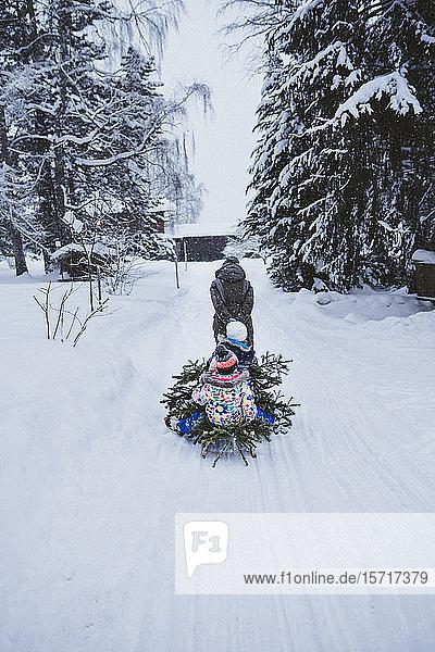 Rückenansicht einer Frau  die einen Tannenbaum und drei Kinder auf einem Schlitten zieht  Jochberg  Österreich