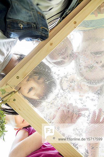 Schulkinder studieren Kräuter auf einem Sieb