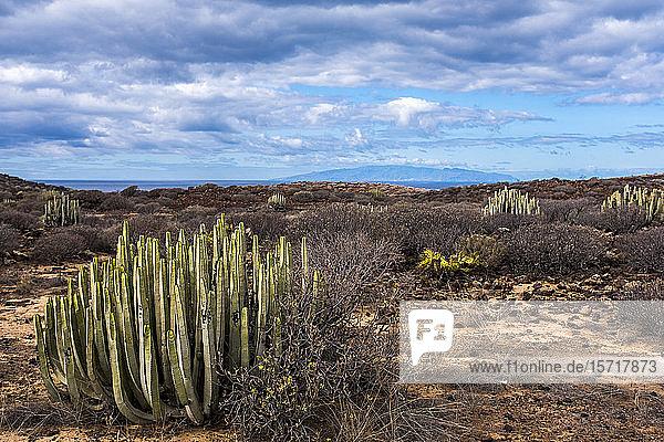 Landschaft  Teneriffa  Spanien
