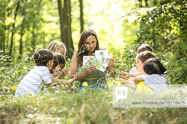 School children learning to recognize plants in nature