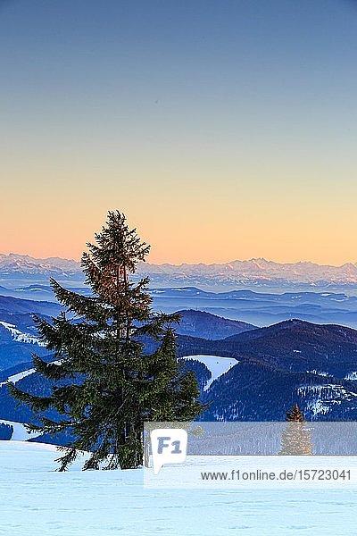 Abendstimmung am winterlichen Gipfel des Belchen bei Sonnenuntergang  Blick auf Bergketten und Alpenkette  Schwarzwald  Baden-Württemberg  Deutschland  Europa