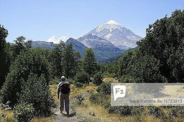 Tourist wandert vor Vulkan Lanín  Nationalpark Lanín  Provinz Neuquén  Argentinien  Südamerika