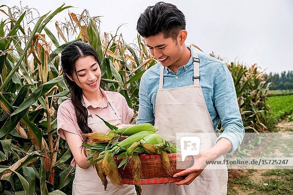 Oriental couple pick corn