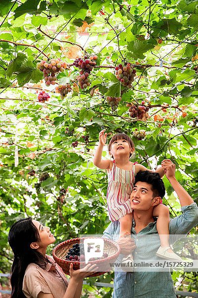 Happy family in the harvest