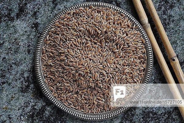 Reiskörner in einer Schale  Indien  Asien