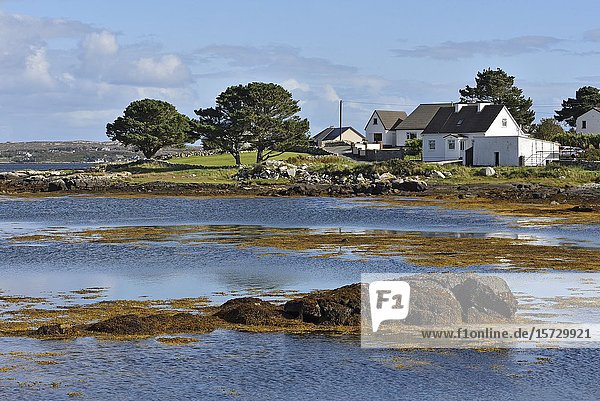 Bay of Gorumna island  Lettermore  west coast  County of Galway  Connemara  Republic of Ireland  North-western Europe.