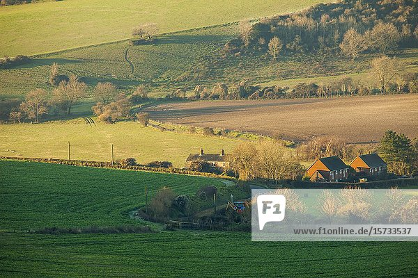 Winter morning in South Downs National Park  West Sussex  England.