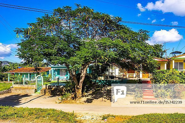 Houses in the tropical nature of Vinales  Republic of Cuba  Caribbean  Central America.