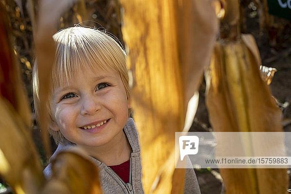 Toddler peering through brown leaves in field