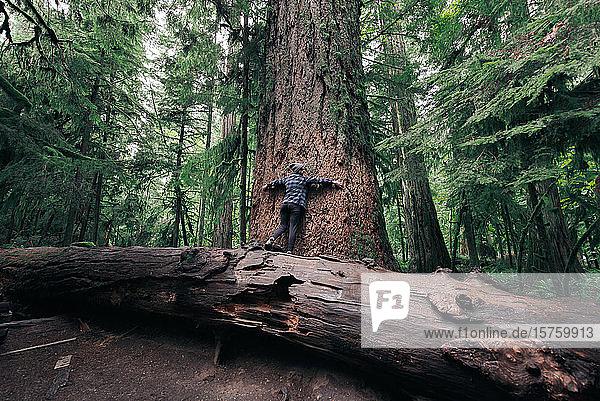 Frau umarmt Baum im Wald  Cathedral Grove  Britisch-Kolumbien  Kanada