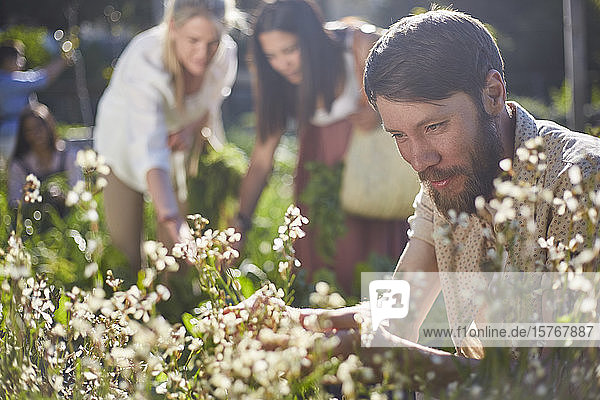 Man looking at flowers in sunny garden Man looking at flowers in sunny garden