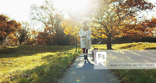 Young woman walking dog in sunny autumn park