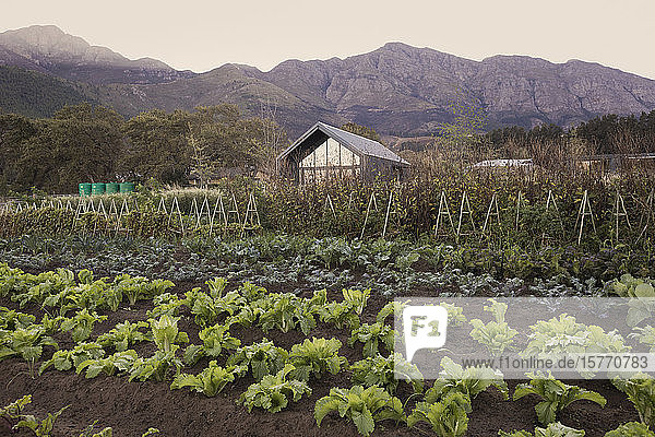 Vegetable garden and rural house below tranquil mountains