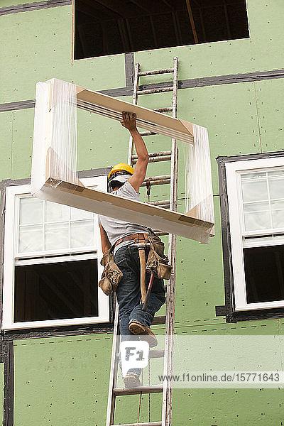 Hispanic carpenter climbing ladder with new window frame