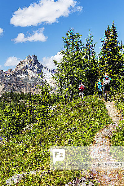 Hikers along a hilly mountain trail with mountain peak in the distance and blue sky and clouds  Yoho National Park; Field  British Columbia  Canada