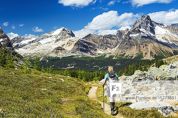 Female hiker along a mountain trail with snow covered mountain range in the distance and blue sky and clouds  Yoho National Park; Field  British Columbia  Canada
