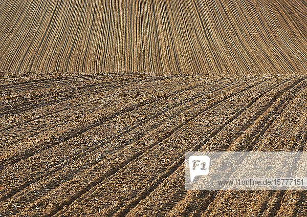 Abgeerntetes Getreidefeld  Nahaufnahme