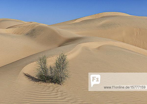 Sanddünen in der Rub al-Khali Wüste  Oman Sanddünen in der Rub al-Khali Wüste, Oman