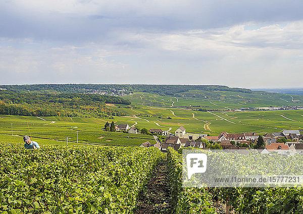 Weinbaugebiet  Hautvillers  Champagne  FRankreich