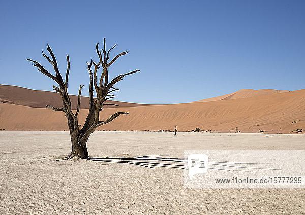 Abgestorbener Baum im Dead Vlei  Namib  Namibia Abgestorbener Baum im Dead Vlei, Namib, Namibia