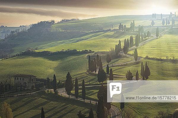 Trees along winding road in Tuscany  Italy