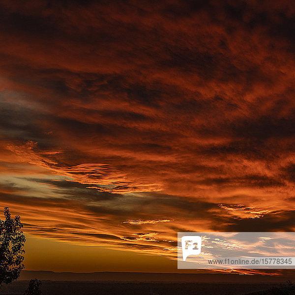 Tree against dramatic sunset sky