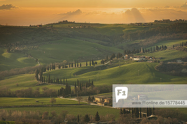 Trees on hills at sunset in Tuscany  Italy