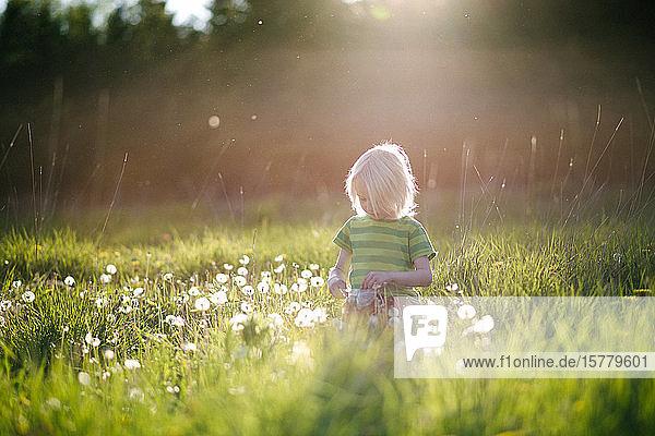Junge spielt mit Löwenzahn im grünen Grasfeld