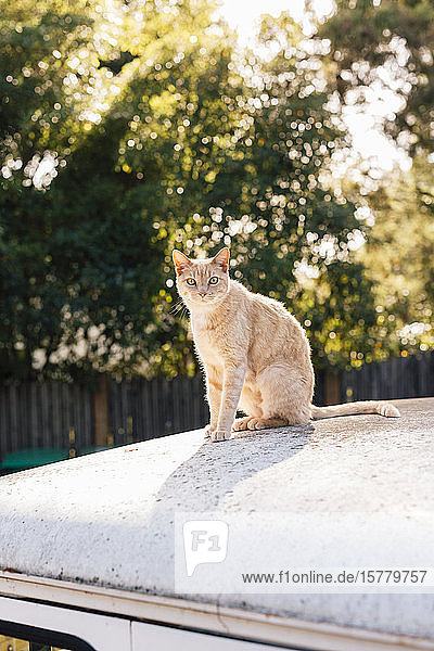 Orange tabby cat sitting on top of vehicle