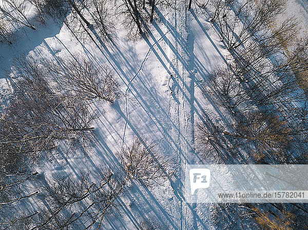 Russia  Leningrad Oblast  Tikhvin  Aerial view of snow-covered road surrounded by bare trees