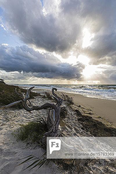 Deutschland  Mecklenburg-Vorpommern  Prerow  Treibholz am sandigen Küstenstrand bei bewölktem Sonnenuntergang