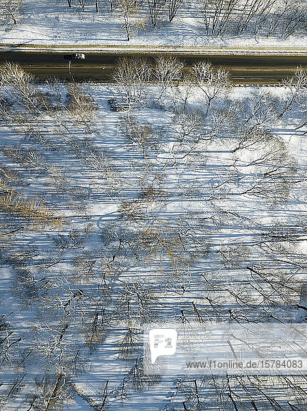 Russia  Saint Petersburg  Aerial view of bare trees along country road in winter